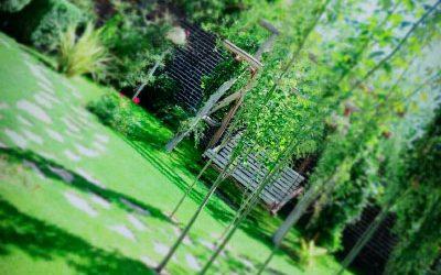 باغ آتلیه بید مجنون